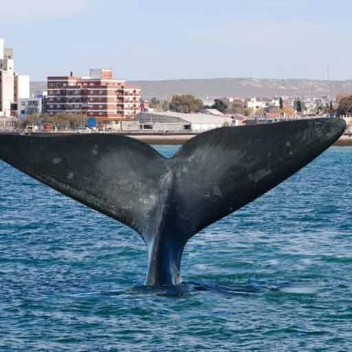 FOTO puerto madryn (2)